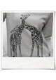 Giraffe in love / women Sweatshirt / Grey / Fair and Organic